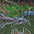 Bird And Turtles On Jekyll Island by Bruce Gourley