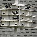 Bird Apartment House by Tina M Wenger