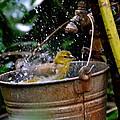 Bird Bath by Carol  Bradley