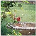 Bird Bath by Marian Palucci-Lonzetta
