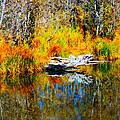 Bird Branch Reflection by Marcy Wagman