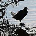Bird by Brandi Moore