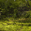 Bird By Bridge In Forest Merged Image by Thomas Woolworth
