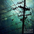 Bird City by Trish Mistric