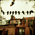 Bird Cityscape by Gothicrow Images