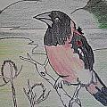 Bird  by C Bradley