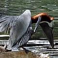 Bird Dance by Linda Kerkau