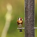 Bird by Daryl Ellis