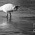 Bird Drinking by Ben Yassa