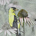 Bird Eating Seeds For One Digital Art by Thomas Woolworth