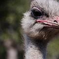 Bird Face by Eric Tressler