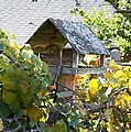 Bird Feeder Amongest The Grapevines by Cynthia Woods