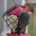 Bird Feeder Wp 06 by Thomas Woolworth