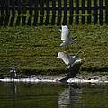Bird Fight by Linda Kerkau