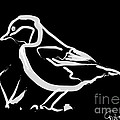 Bird by Go Van Kampen