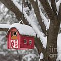 Bird House On Tree In Winter by Elena Elisseeva