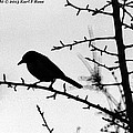 Bird In B And W by Karl Rose