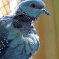 Bird In Blue Dress by Munir Alawi