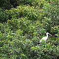 Bird In Bush by Linda Kerkau
