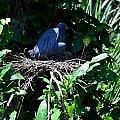 Bird In Nest by Richard Zentner