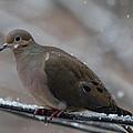 Bird In Snow - Animal - 011310 by DC Photographer