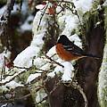 Bird In Snow by Monique Morin Matson