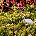 Bird In The Blooms by Lewis Mann