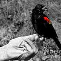 Bird In The Hand.seattle.bw by Jennie Breeze