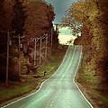 Bird In The Road by Jill Battaglia