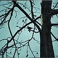 Bird In Tree by Tara Potts