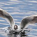 Bird Landing by Mats Silvan