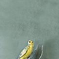 Bird by Margie Hurwich