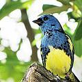 Bird by MTBobbins Photography