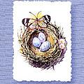 Bird Nest With Daisies Eggs And Butterfly by Irina Sztukowski