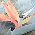 Bird Of Paradise 2 by Catherine JN Christopher