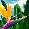 Bird Of Paradise 5 by Dawn Eshelman