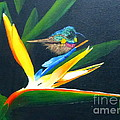 Bird Of Paradise by Alicia Fowler