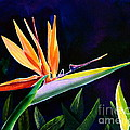 Bird Of Paradise by AnnaJo Vahle