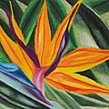 Bird Of Paradise by Annette M Stevenson