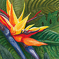 Bird Of Paradise by Carlene Salazar