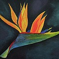 Bird Of Paradise by CB Woodling