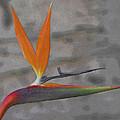 Bird Of Paradise by Ernie Echols