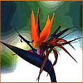 Bird Of Paradise Flower Fragrance by Susanne Van Hulst
