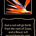 Bird Of Paradise Flower With Bible Quote From Isaiah by Rose Santuci-Sofranko