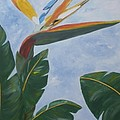 Bird Of Paradise by Graciela Castro