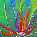 Bird Of Paradise by Kelly  ZumBerge