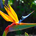 Bird Of Paradise Plant by Ryan Rodriguez