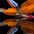 Bird Of Paradise Reflective Pool by Michael Moriarty