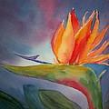 Bird Of Paradise by Sue Kemp