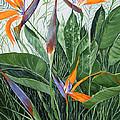 Bird Of Paradise by Virginia McLaren